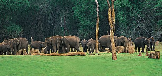 Periyar wild life, Kerala