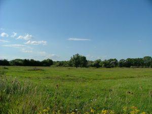Wet meadow in Szigetkoz, Hungary